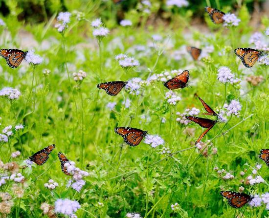 Butterfly Gardening Seminole County