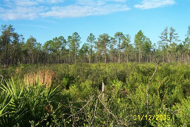 please note  for the month of march on this property only the gate will open at 6 30 am and close at 8 30 pm  the black hammock wilderness area     black hammock wilderness area   seminole county  rh   seminolecountyfl gov