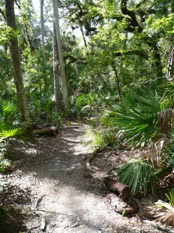 in northwest seminole county features a variety of wetland habitats within the floodplain of the st johns river  wet prairie hydric hammock and cypress     black bear wilderness area  rh   seminolecountyfl gov