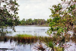 Wetlands Information