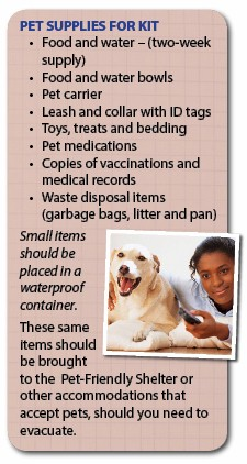 Pet Supplies for Kit